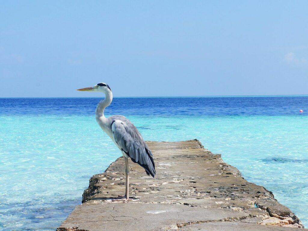 Počitnice na Maldivih